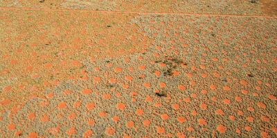 The marvellous mystery of the fairy circles