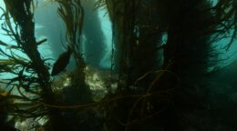 Underwater Understory: The south-west forest you've never heard of